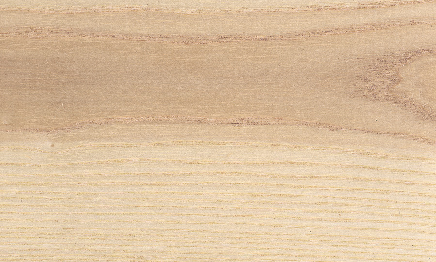 Species White Ash - Solid & laminated hardwood squares product - Champeau The Harwood Company